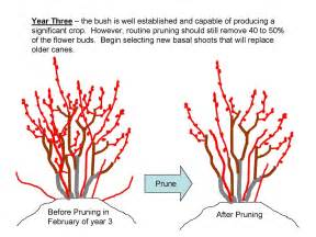 How And When To Prune Fruit Trees » Home Design 2017