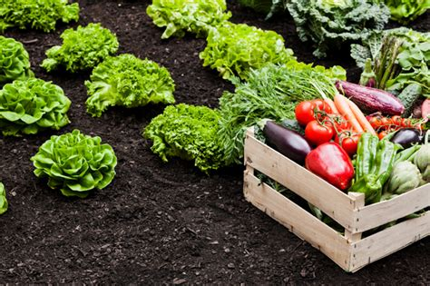 How To Start A Vegetable Garden Starting A Small Vegetable Garden
