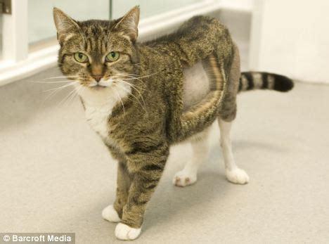 Sisir Logam Untuk Kucing asal usul kucing pertama di dunia yang menggunakan lutut logam