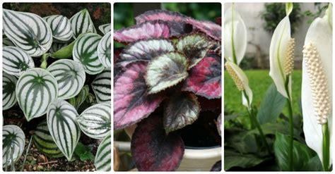 light indoor plants house plants  thrive