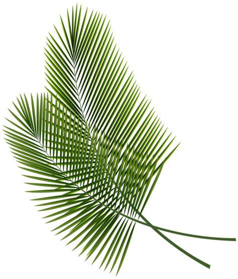 green leaves png image veerendra vijaya pinterest tropical leaves png clipart image photoshop tutos