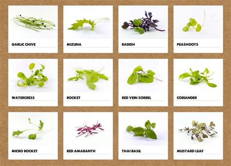 microgreens varieties google search farms  london