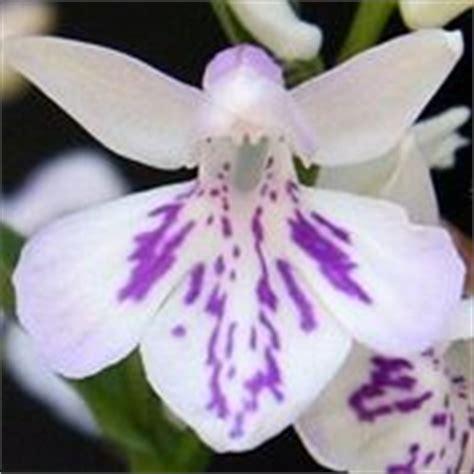 significato fiore giglio significato giglio linguaggio dei fiori