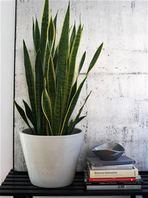 indoor plants   home rl