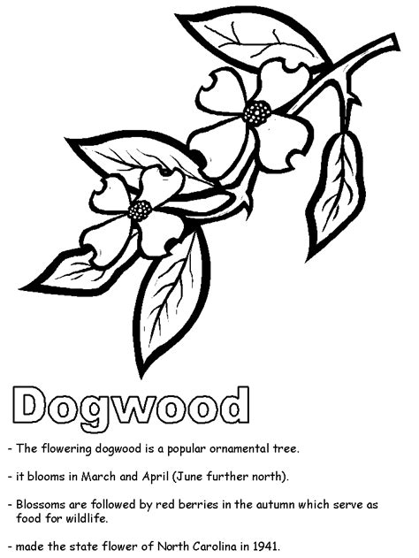 coloring page of dogwood flowers dogwood coloring page