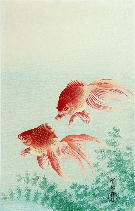 japanese art fish paintings goldfish ohara koson fine art