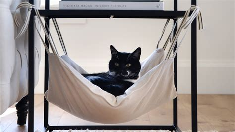 cat hammock martha stewart