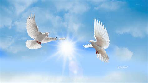 doves hd wallpaper 557370 jpg doves hd wallpaper 557370 jpg 1920 215 1080 religious