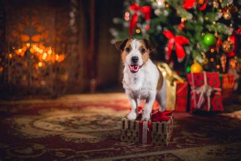 7 ideas on how to spend christmas with your dog top dog tips
