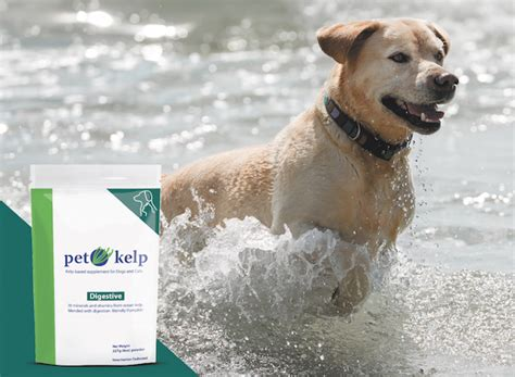 kelp for dogs check out the health products we re wagging about in dogster magazine