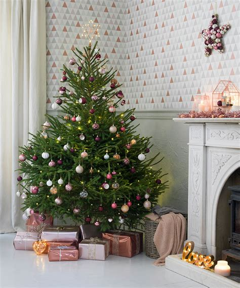 where to buy a real christmas tree in belfast real trees how to buy decorate and care for your fir