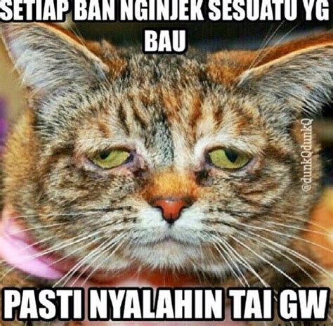 film lucu kucing 1000 images about funny on pinterest facebook ps and haha