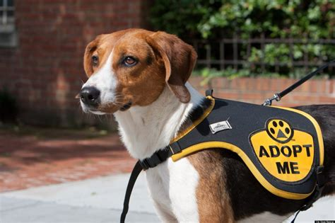 city dogs rescue dogs tails eat dogs help city dogs at vinoteca huffpost