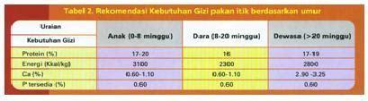 Bibit Bebek Raja itik ratu raja 171 ternak itik intensif