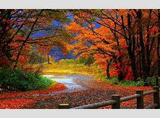 trail in autumn forest-Beautiful scenery wallpaper Preview ... Free Clipart First Day Of Summer