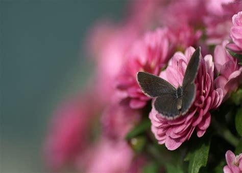 imagenes de mariposas bonitas y fondos de pantalla de flores vector fondos de pantalla para celulares