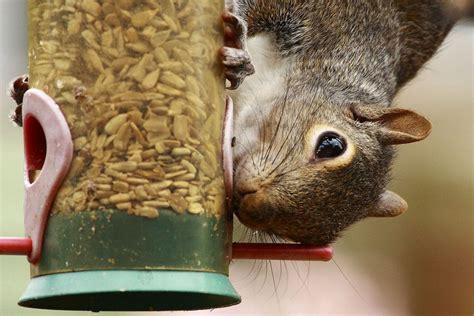 easy tips   squirrels   bird feeders