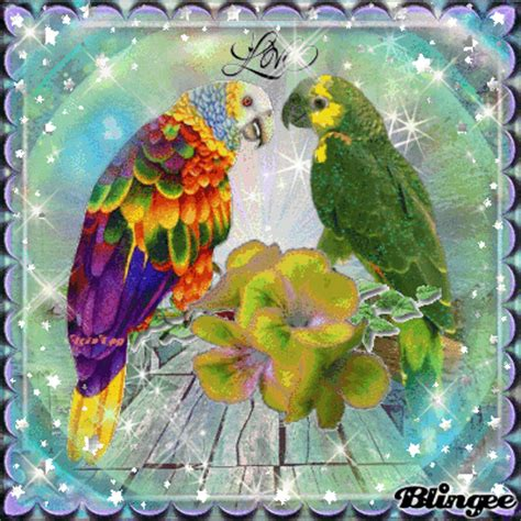 Home Maker Online parrot love picture 131053582 blingee com