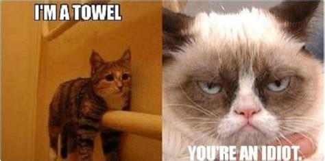 Towel Meme - i m a towel grumpy cat meme