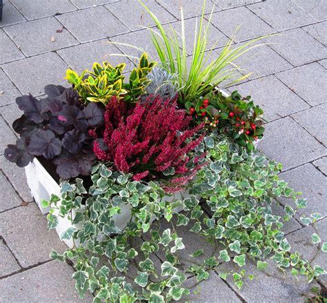 pflanzen set f 252 r balkonbepflanzung 80 cm pflanzen - Winterharte Balkonpflanzen Bilder