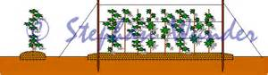 himbeer gestell bauen pflanzen in nanopics kletterger 252 st f 252 r pflanzen