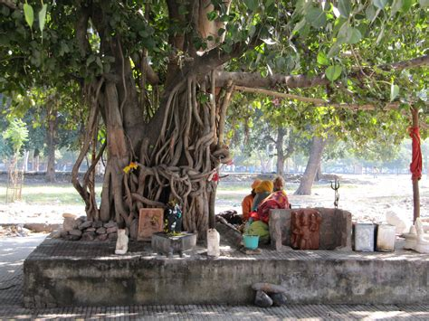 india stuccogranola