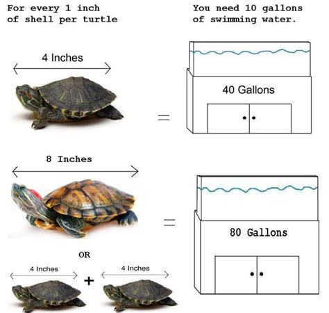 do turtles need heat ls 51 best images about turtle babies setup on pinterest