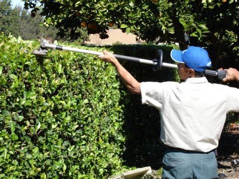 Pest Control Winter Garden Fl - florida landscaping professionals 187 work crews