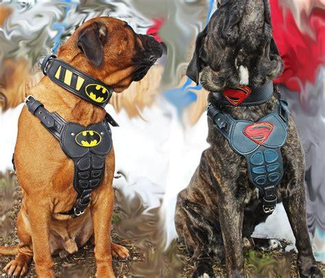 harness vs collar for puppy superman vs batman custom collar and harness oli collars