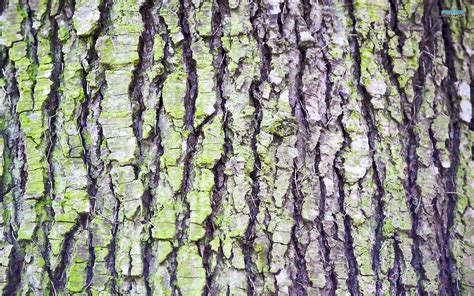 images tree bark tree bark wallpaper photography wallpapers 2914 nature tree bark