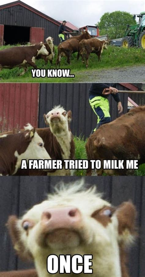 Funny Cow Memes - mad cow