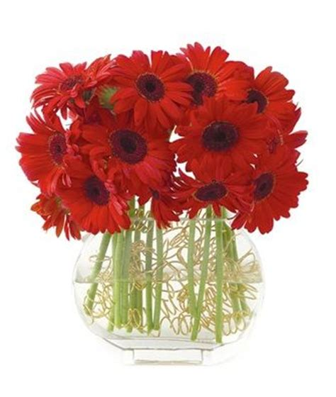 names of christmas flowers types of red flowers