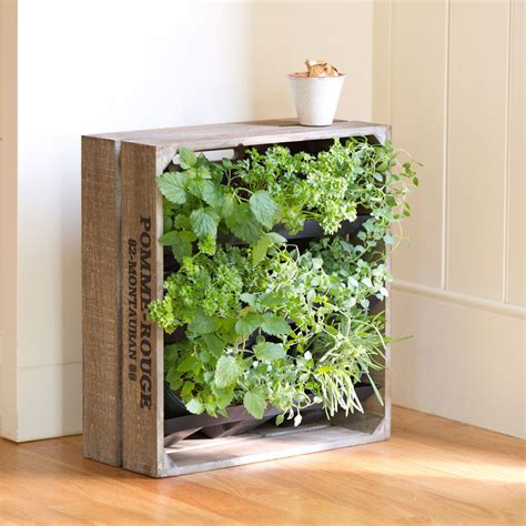 wine crate vertical wall garden the green