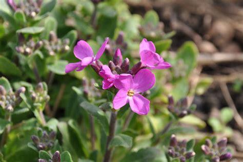 wilde bloemen terschelling bloemen1