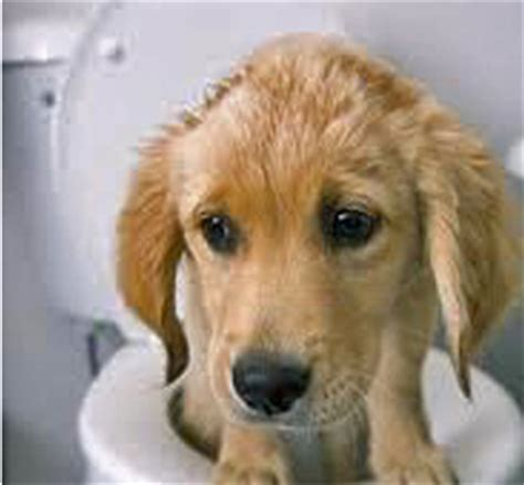 home remedies for puppy diarrhea home remedies for diarrhea