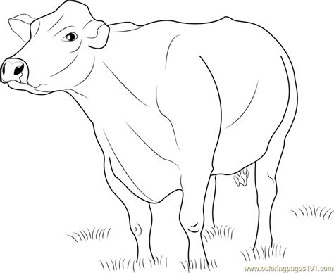 dairy cow coloring page free coloring pages of free dairy cow
