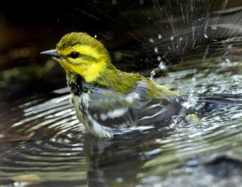 birds using dog s dish for bath may spread disease