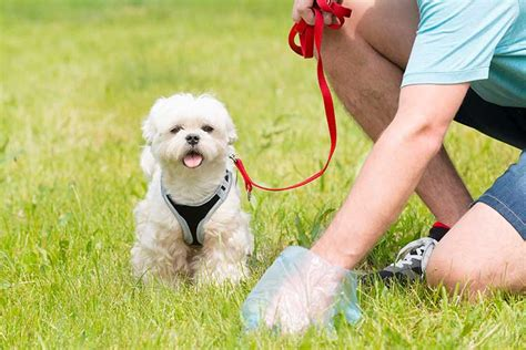what to do when dog poops in the house natural ways to dispose of dog poop dog training nation