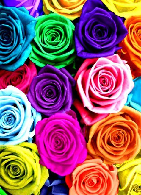 rainbow roses color color splash quot c quot pinterest