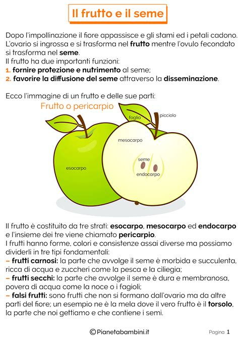 le parti fiore scuola primaria il frutto e il seme schede didattiche per la scuola