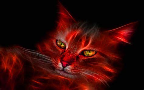 imagenes bacanas en 3d fondo pantalla 3d gato fuego