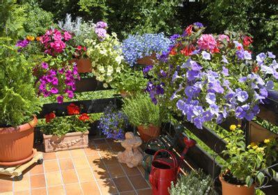 Welche Balkonpflanzen Vertragen Viel Sonne by Balkon Und Terrassenpflanzen G 252 Nstig Kaufen Auf Blumen De