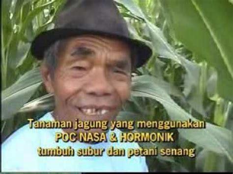 Benih Jagung Dekalb jagung pioner 29 doovi