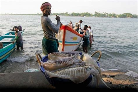 fishing boat cost in india pakistan captures eight indian fishing boats off gujarat coast