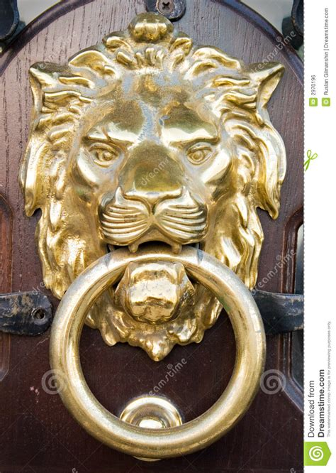 lion head royalty  stock image image