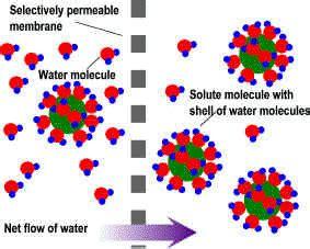 hydration gif pruebas modelos ejemplos material de estudio revisado