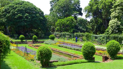 Durban Botanic Gardens Flowers Pictures View Images Of Durban Botanical Gardens