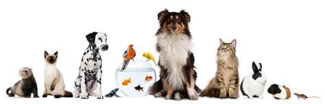 Pet Sweepstakes - 2015 cutest pet photo contest shearer volkswagen news