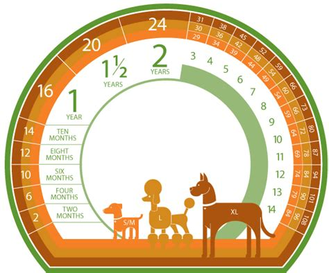 poodle lifespan in human years real age chart original