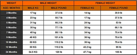 rottweiler weight informational page quality akc rottweilers in ohio